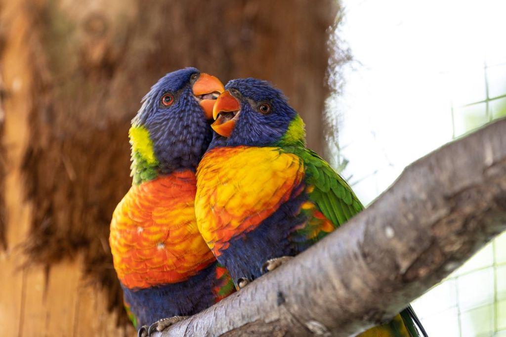 É a pensar nos passarinhos que vos desejo um ÓTIMO DIA DOS NAMORADOS