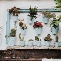 Plantas em casa: aliviam o stress e melhoram o humor